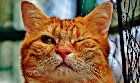 猫 ウィンク