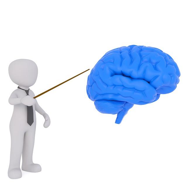 脳 イラスト